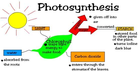 Homework help photosynthesis explanation