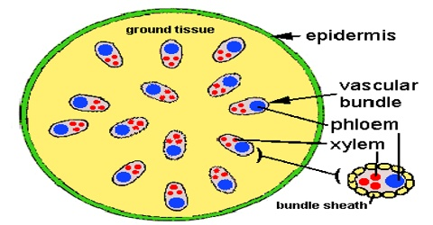Epidermal Tissue System