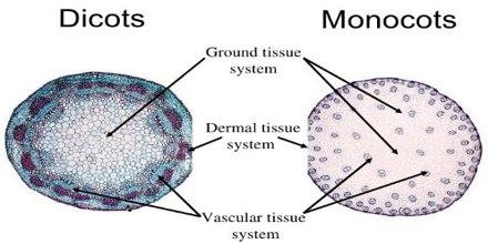 Ground Tissue System in Plants - QS Study