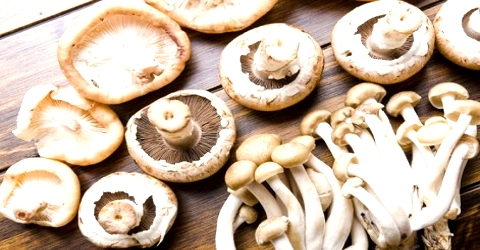 Mushroom as Food