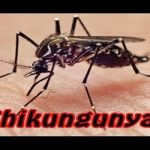 Chikungunya: Overview and Treatments