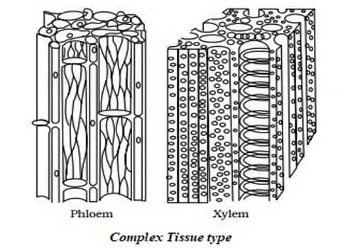 Permanent Tissue 1