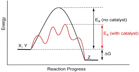Effect of Catalyst on Equilibrium