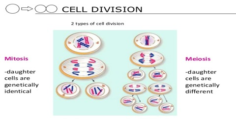 Define Cell Division with its Types
