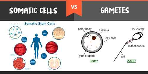 Nature of Living Cell on the basis of Function