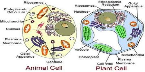 Structure of Living Cell