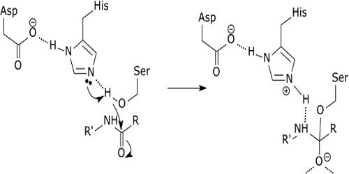 Mechanism of Acid-Base Catalysis