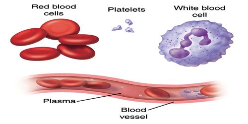 Blood Cell or Blood Corpuscles
