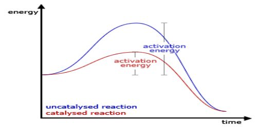 A Catalyst is Specific in its Action