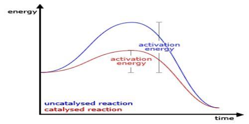 Characteristics of Catalysts