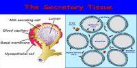 Secretory Tissue in Plants