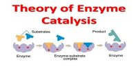 Characteristic Properties of Enzyme Catalysis