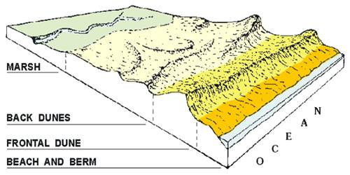 Beaches and Dunes: Depositional Landforms