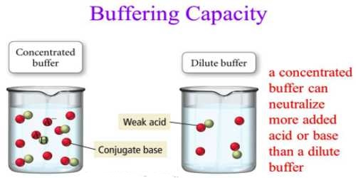 buffer and buffer capacity Saliva buffer capacity: caries activity results obtained from the  investigation of the saliva buffering capacity and its relationship to the reduced  dental.