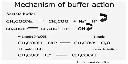 Mechanism of Buffer Action