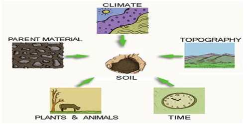 Time: Soil Forming Factor