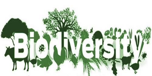 Ecological Role of Biodiversity