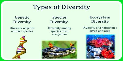 species diversity of lithified samples from Simpson's diversity index is a measure of diversity which takes into account the number of species present, as well as the relative abundance of each species as species richness and evenness increase, so diversity increases.