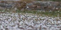 Hail or Hailstones