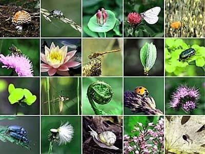Species Diversity 1