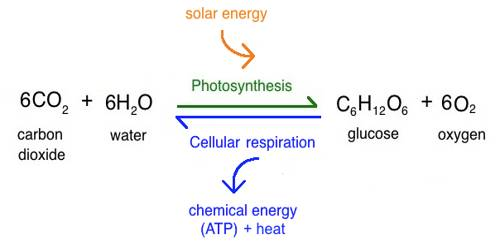 Photosynthesis in Geography