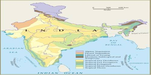 Types of Forests in Indian Subcontinent