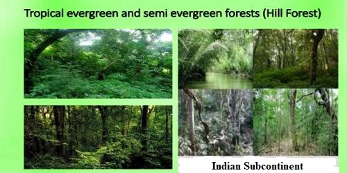 Tropical Evergreen And Semi Evergreen Forests In Indian Subcontinent Qs Study The optimum biome of tropical evergreen forest is characterized by heavy rainfall throughout the year and worldwide known for their diversity of flora and fauna. qs study