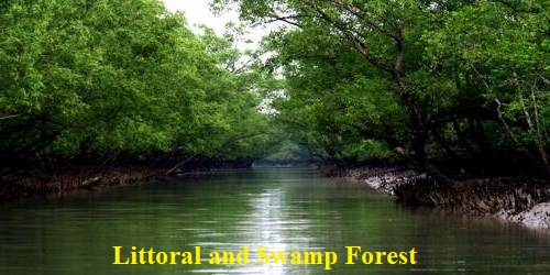 Littoral and Swamp Forestsin Indian Subcontinent