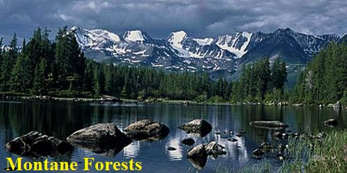 Montane Forests in Indian Subcontinent