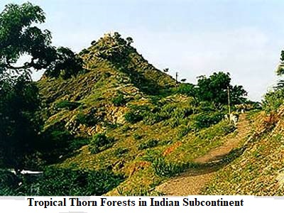 Tropical Thorn Forests In Indian Subcontinent Qs Study