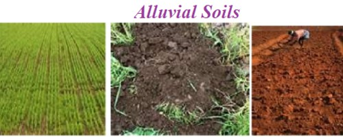 Alluvial Soils in Indian Subcontinent - QS Study