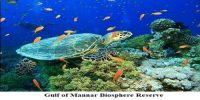 Gulf of Mannar Biosphere Reserve