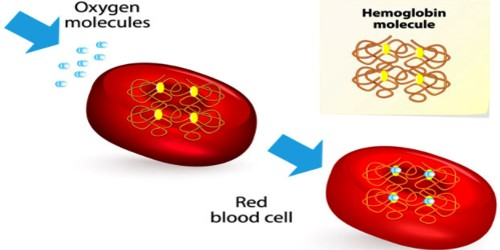 Hemoglobin (Hb) definition with it's normal count and Functions