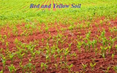 red and yellow soil in indian subcontinent qs study