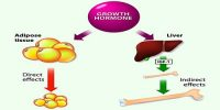 Growth hormone has both Diabetogenic and Ketogenic effect – Explain