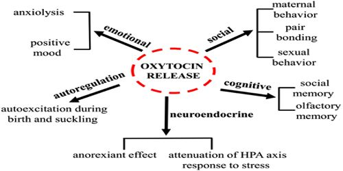 Functions of Oxytocin