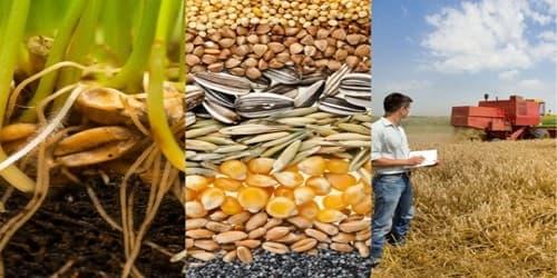 Cover Letter for Agronomist