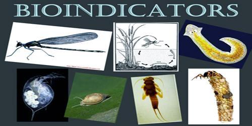 Bioindicator
