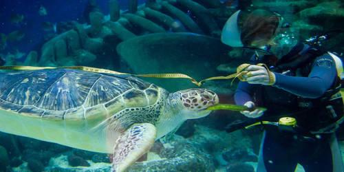 Cover Letter for Aquarist
