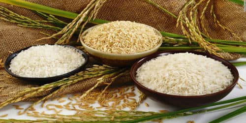 Rice – Our Staple Food