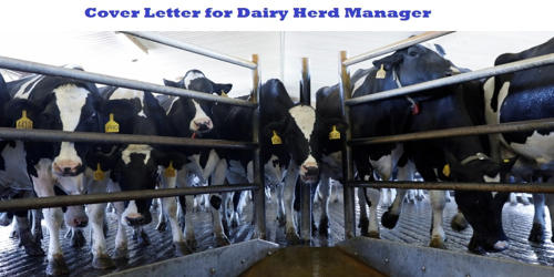 Cover Letter for Dairy Herd Manager
