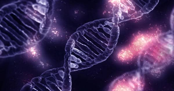 Inflammatory gene helps to control Obesity Risk
