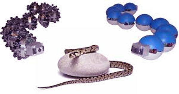 One step closer to using robotic snakes in search and rescue