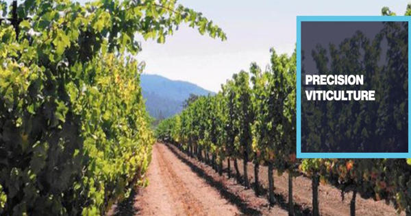 Precision Viticulture Technology and its Uses