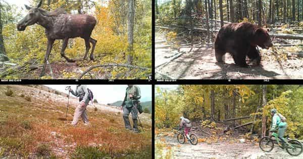 Impact of Recreational Activity on Wildlife Habitats