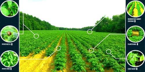 Satellite Crop Monitoring System for Efficient Farming 1