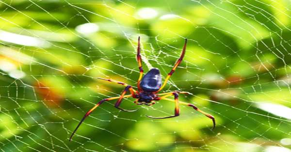 Scientists shave spider's legs to create anti-adhesive nanotechnology