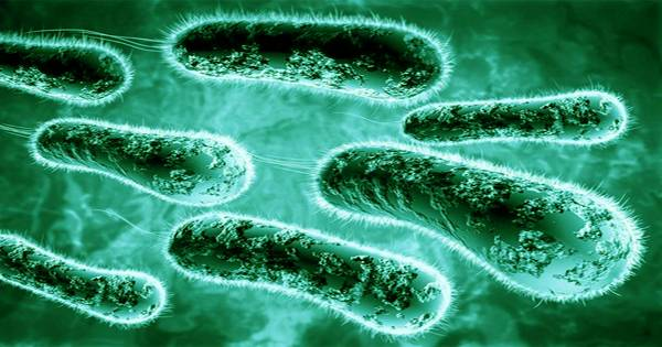 Microbes to clean toxic electronic waste